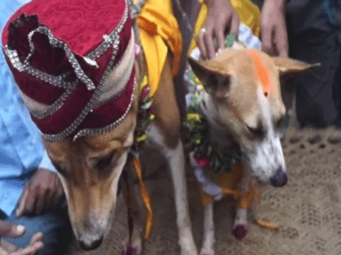 Dog-bitch married in this village of Varanasi, villagers gave this reason