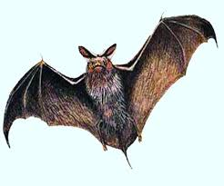 Death of 800 bats suddenly revealed in UP, Corona report arrived