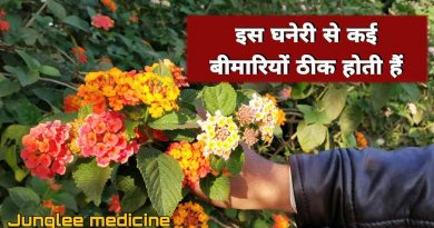 Taking decoction of this flower, drinking it cures this disease