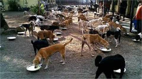 All dogs are millionaires in this village of India, what is the reason?