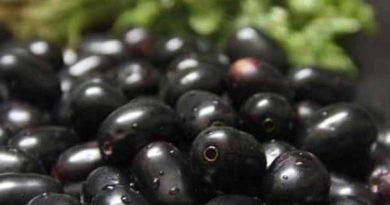 Berries are very beneficial, this disease gets cured by eating it