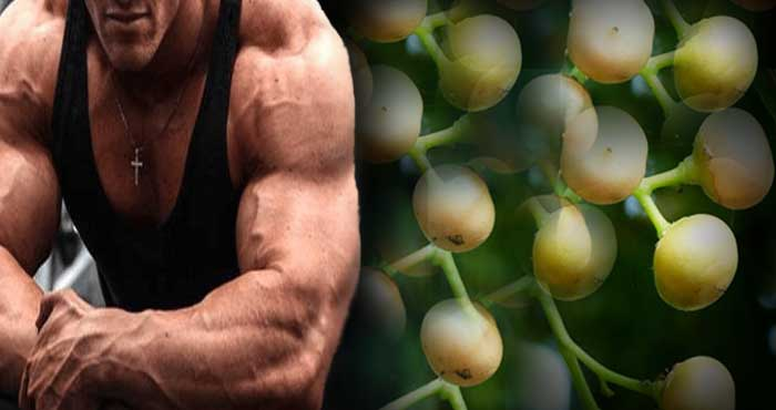 Eating these Indian fruits will become a wrestler in just 1 month, gives 4 times more strength than meat. Know how